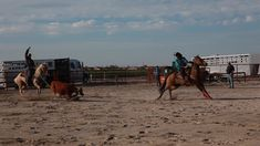Team Roper, Cowboy And Cowgirl, Life Is Beautiful, Camel, Horses, Country, Box, Animals, Snare Drum