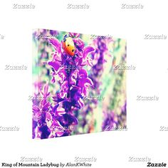 King of Mountain Ladybug Canvas Print