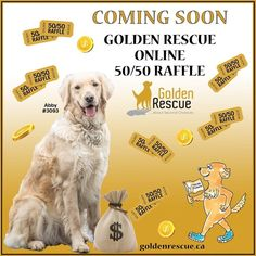 COMING SOON!! Announcing a new fundraising initiative! Golden Rescue is going to be holding its first ever online 50-50 draw! Stay tuned for more details in the coming weeks. *Due to AGCO rules, only Ontario residents are eligible to play* #goldenretriever #rescuedog #online #secondchances