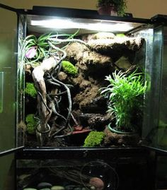 1000 Images About Exo Terra Cages On Pinterest Crested