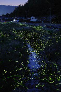 fireflies over a creek, maniwa, japan