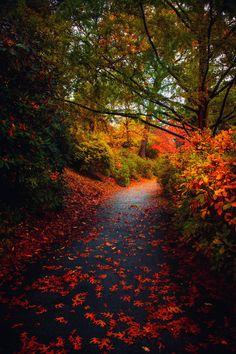 ~~Returning • autumn path, Mt Auburn Cemetery, Cambridge, Massachusetts  by mylifethroughthelens~~