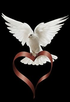 Paz y amor…(Peace and love). Dove Images, Dove Pictures, Jesus Pictures, Short Quotes Love, Les Gifs, Spiritus, White Doves, Background Pictures, Morning Images