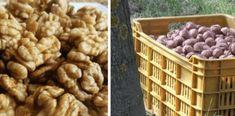 Vlašské ořechy tímto způsobem uchováte až 10 let se stále stejnou chutí. Nezplesniví ani nezatuchnou | iRecept.cz Dog Food Recipes, Food And Drink, Ale, Cooking, Breakfast, Advent, Syrup, Kitchen, Morning Coffee