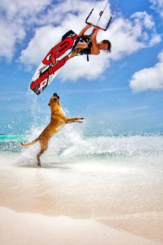 Pro Kiteboarder Jeremie Tronet dodges a cool beach dog.