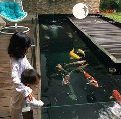 Modern Tropical House, Tropical Houses, Carpe Coi, Raised Pond, Turtle Aquarium, Koi Pond Design, Japanese Hot Springs, Koi Carp, Fish Ponds