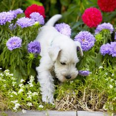 Dog Friendly Plants and Flowers