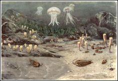 Cambrian sea | Zdeněk Burian (1905-1981) | Prehistoric Animals (1960)