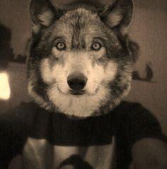 Howl !!!
