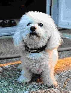 Majority of the dog owner's first purchase for the new puppy will be the dog Collar. These dog colors come in verity of colors and materials that...