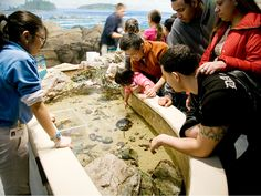 "These brave kids stick their hands in the ""touch tank,"" as stingrays glide through the clear shallow water. Kids (and adults) can touch various species of sharks and rays at Boston's New England Aquarium, including cownose rays, southern stingrays and coral catsharks."