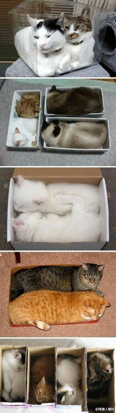 cats in the box.
