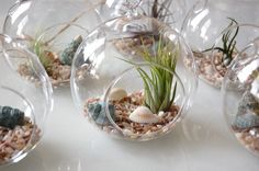 Cool project for kids...air plants
