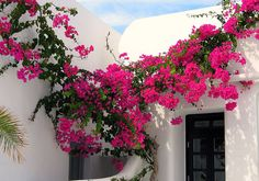breathing colors in Mykonos Island