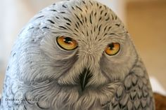 Snow owl on rock by Ernestina