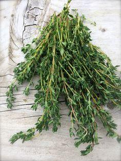 Herencia de inglés tomillo hierba culinaria con cualidades medicinales excelente sabor frescas o secas semillas raras cultivadas orgánicamente