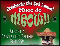 Celebrate Cinco de Meow and welcome a cat or kitten into your family for $5!  The celebration takes place today through Sunday.  www.HoustonSPCA.org (restrictions apply)
