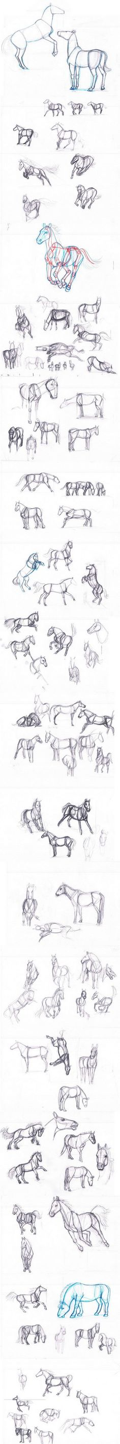 Horse studies with photoreference by sofmer.deviantart.com on @deviantART