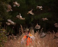 Dorchester Shooting Preserve is a southeast Georgia hunting preserve that offers the finest Quail Hunting, Pheasant Hunting, Whitetail Deer Hunting and Sporting Clays.