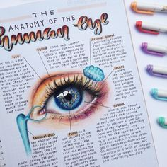 #prismacolor #art #eye #study Cute Notes, Pretty Notes, Good Notes, Eye Anatomy, Anatomy Study, Class Notes, School Notes, Cute Handwriting, College Notes
