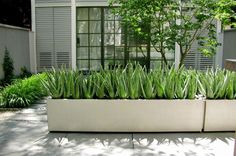 This is outside but imagine this planter indoors and used as a section divider...