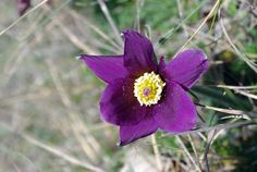 Qui n'aime pas les fleurs et surtout les petites fleurs sauvages ?Pas besoin d'avoir une âme romantique ou d'être botaniste, les yeux rivés sur les pelouses du Causse nous vous dévoilerons quelques lieux secrets où les orchidées fleurisse