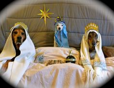 3 Wise Men (dogs) themed greeting card (GMA viewer submitted)