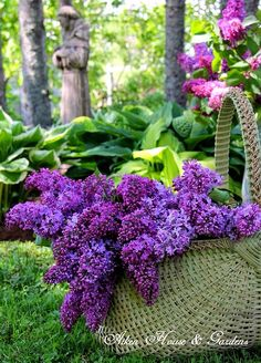 Lilacs.for my mom.