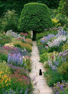 cat and perennial border