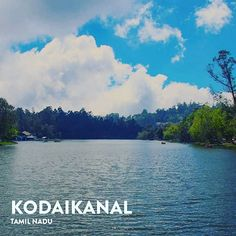 KODAIKANAL is one of the best places to relax and indulge in Nature walks in the overly green fields cycling in the long stretched roads  having brunches at viewpoints and enjoying the sparkling waterfalls with your loved ones.  Photo by: @thejus_satheesan  . . . . . #loveindiaagain #anokhaindia #pintrip #wanderlust #nature #trip #travelindia #travelgram #vacation #indiatravels #instatravel #adventure #travelphotography #incredibleindia #placestovisit #lovetotravel #traveldiaries #lake…