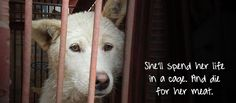Please take 30 seconds to help close shocking dog meat farms in South Korea. Puppies and dogs spend their lives in cages, before they're slaughtered for human consumption. Sign here now to help them.