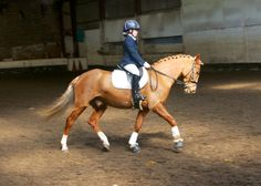 One of our first dressage competitions in 2013