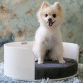 Found it at AllModern - Acrylic Curved Dog Bed
