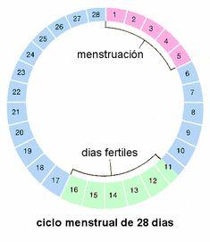 Ciclo ovarico: Menstruación y dias fértiles