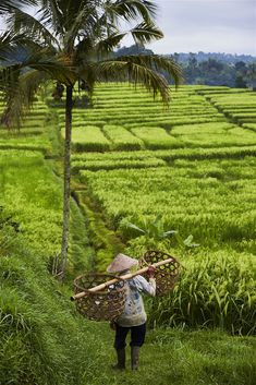 Immerse yourself in the colour and sound of a traditional festival, dine on local specialities, snorkel beautiful reefs, watch craftspeople at work, wander through lush rice fields, or just relax and be pampered at a Balinese spa. There's an awful lot to do in paradise and it's not all about the beaches.