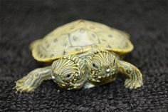 Thelma and Louise, a two-headed Texas cooter turtle, is seen in an undated photo provided by the San Antonio Zoo. Zoo officials on Tuesday, June 25, 2013 said the Texas cooter was born June 18. The turtle was one of several Texas cooters born this month at the zoo but the only one with two heads. The unusual turtle will go on display Thursday at the zoo's Friedrich Aquarium. Photo: San Antonio Zoo