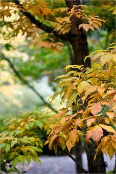 Bellevue Botanical Gardens in Bellevue, WA