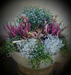grave shell – Famous Last Words Winter Planter, Fall Planters, Container Flowers, Container Plants, Autumn Garden Pots, Gemüseanbau In Kübeln, Container Gardening Vegetables, Winter Flowers, Flower Boxes