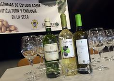 Martinsancho, mejor Verdejo de España https://www.vinetur.com/2015040918892/martinsancho-mejor-verdejo-de-espana.html