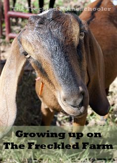 """""""Growing up on The Freckled Farm"""" a new weekly series from The Freckled Homeschooler"""