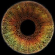 Eyescapes • RANKIN.