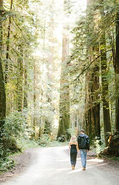 Gorgeous engagement shoot in the middle of the Redwoods