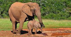 Se celebra el Día Mundial de la Vida Silvestre - http://verdenoticias.org/index.php/component/content/article/28-noticias/agenda-ambiental/113-se-celebra-el-dia-mundial-de-la-vida-silvestre?Itemid=101
