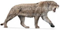 Cave lion.