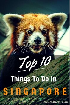 Top 10 Things To Do In Amazing #Singapore! Number 6 is my favourite! Which one have you done, or like to do?