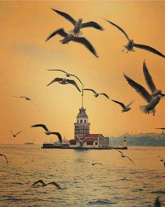 Istanbul TURKEY Turkey Travel Honeymoon Backpack Backpacking Vacation Budget Off the Beaten Path Wanderlust Istanbul City, Istanbul Travel, Places To Travel, Places To See, Turkey Travel, Belle Photo, Wonderful Places, Beautiful Landscapes, Hagia Sophia