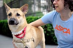 Advice from the ASPCA on how to train your dog to walk nicely without pulling on the leash