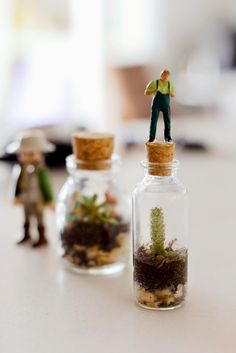 Estéfi Machado: Mini-terrarium * O mundo num vidrinho
