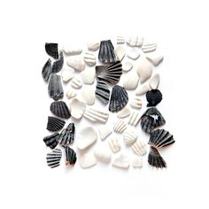 black and white shells (mary jo hoffman)