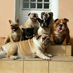 The Cutest Bulldog Family Youll EverSee